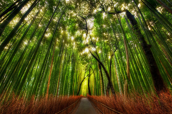 Trey Ratcliff - The Bamboo Forest